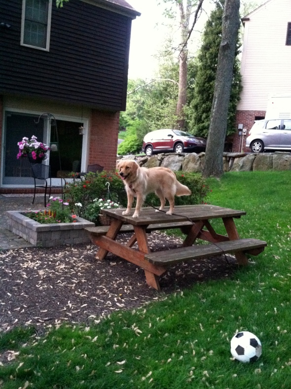 queen of the picnic table.